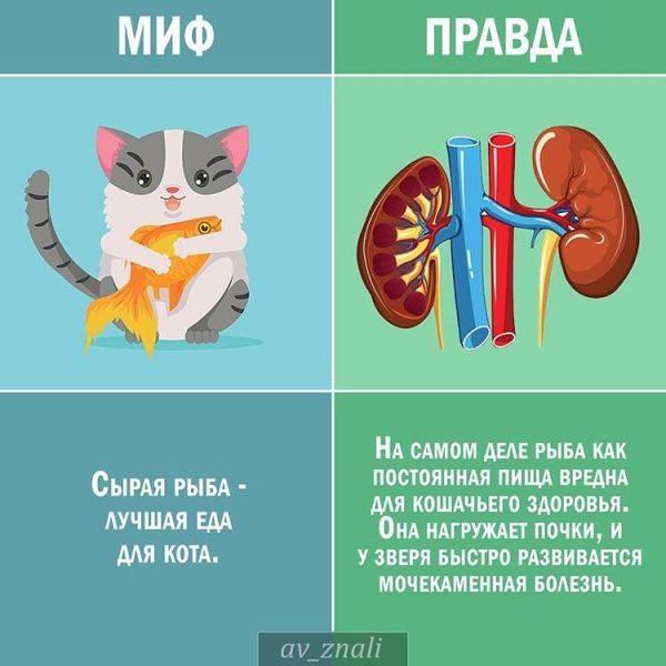 Кто лучше лечит кот или кошка - муркин дом