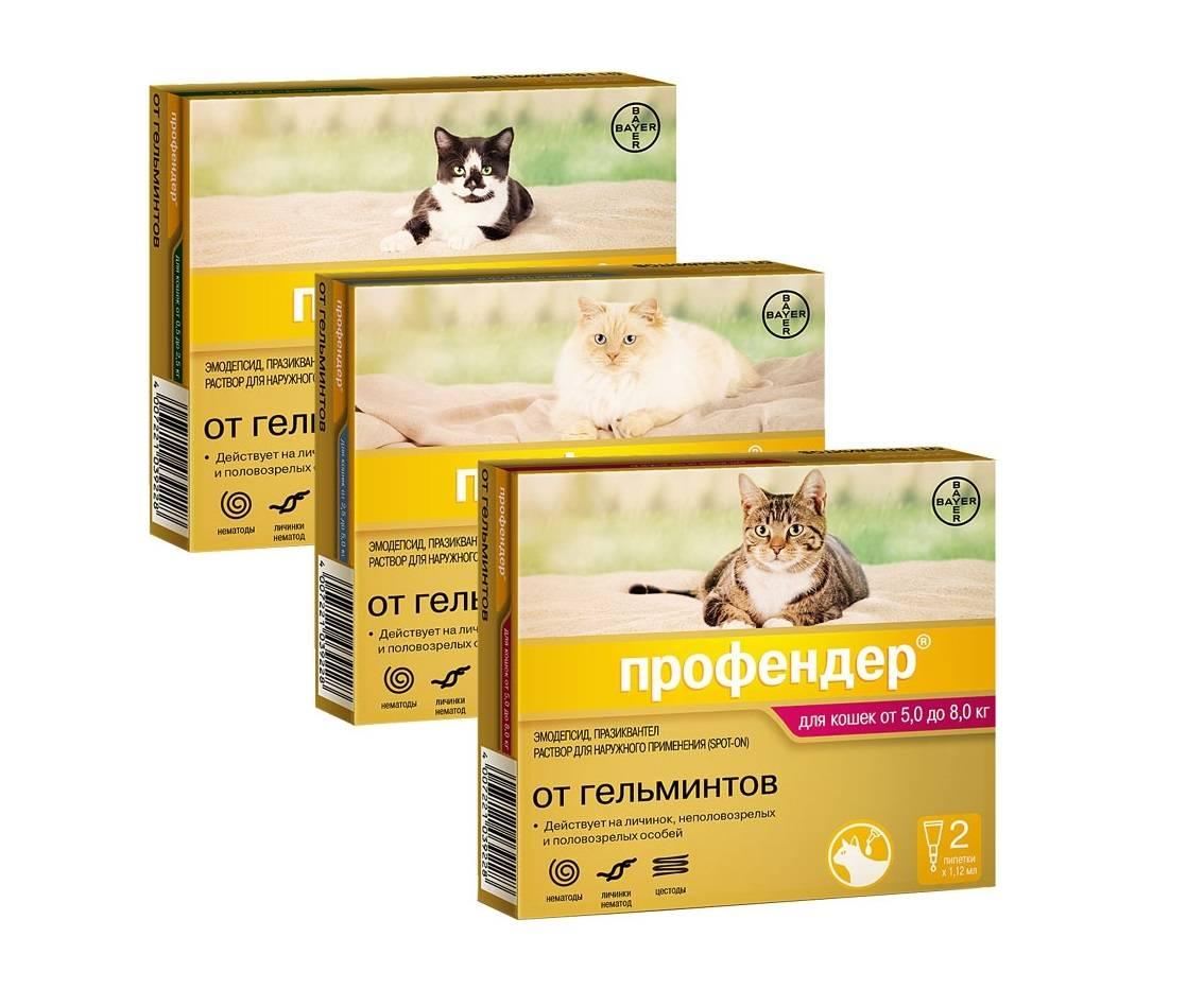 Можно ли глистогонить беременную кошку: таблетки и суспензии отравление.ру можно ли глистогонить беременную кошку: таблетки и суспензии