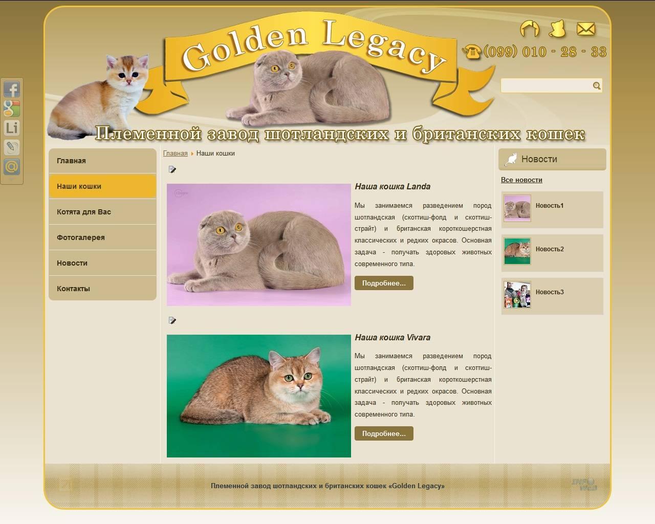 Британская кошка лилового окраса: история породы, виды, особенности и фото британцев