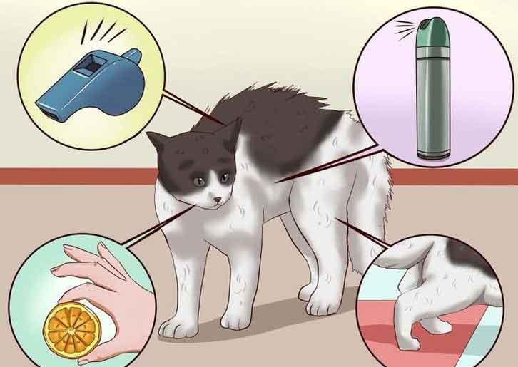 Как усыпить кошку в домашних условиях самому как усыпить кошку в домашних условиях самому