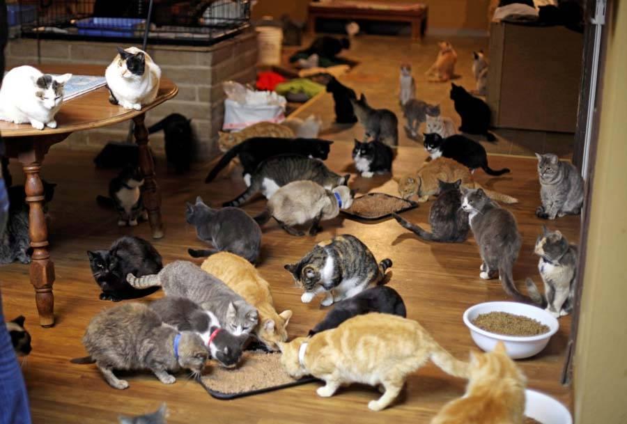 Куда деть котят, если их никто не берет, как пристроить кошку, найденную на улице?