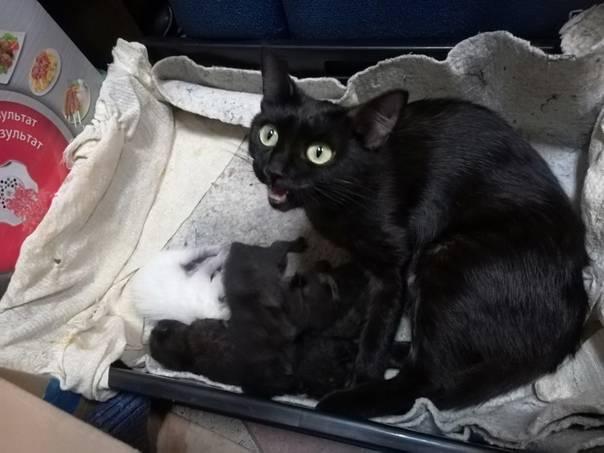 Как ведет себя кошка после вязки: норма и возможные проблемы