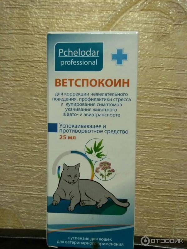 Гиперактивный кот – что делать, какое успокоительное дать слишком активному котенку 2–3 месяцев?