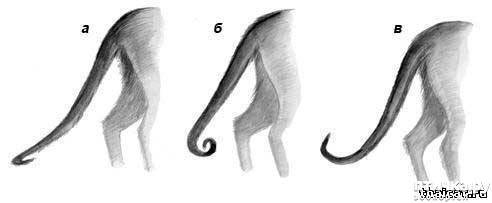 Причины, по которым кошка ходит с опущенным хвостом