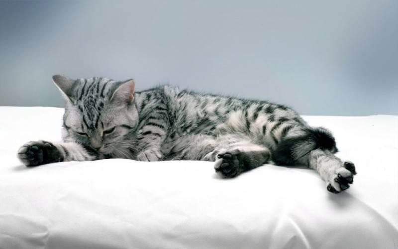 Как правильно купать кота — полезные советы и нюансы