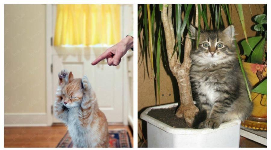 Почему котята и взрослые кошки грызут провода, как отучить кота это делать?