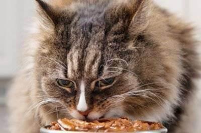 Советы ветеринара, как правильно кормить кошку