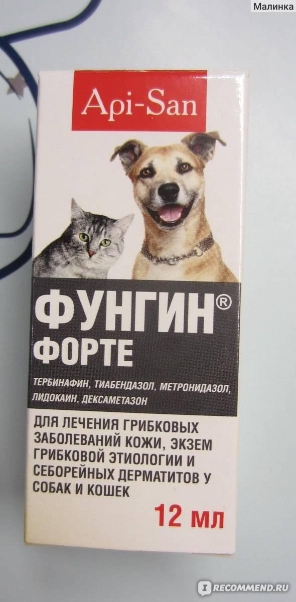 Применение препарата фунгин для кошек: дозировка, показания и цена