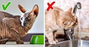 Как притормозить слишком быстро поглощающую пищу кошку