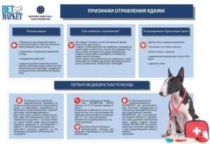 Отравление у кошек и котов: симптомы, лечение в домашних условиях