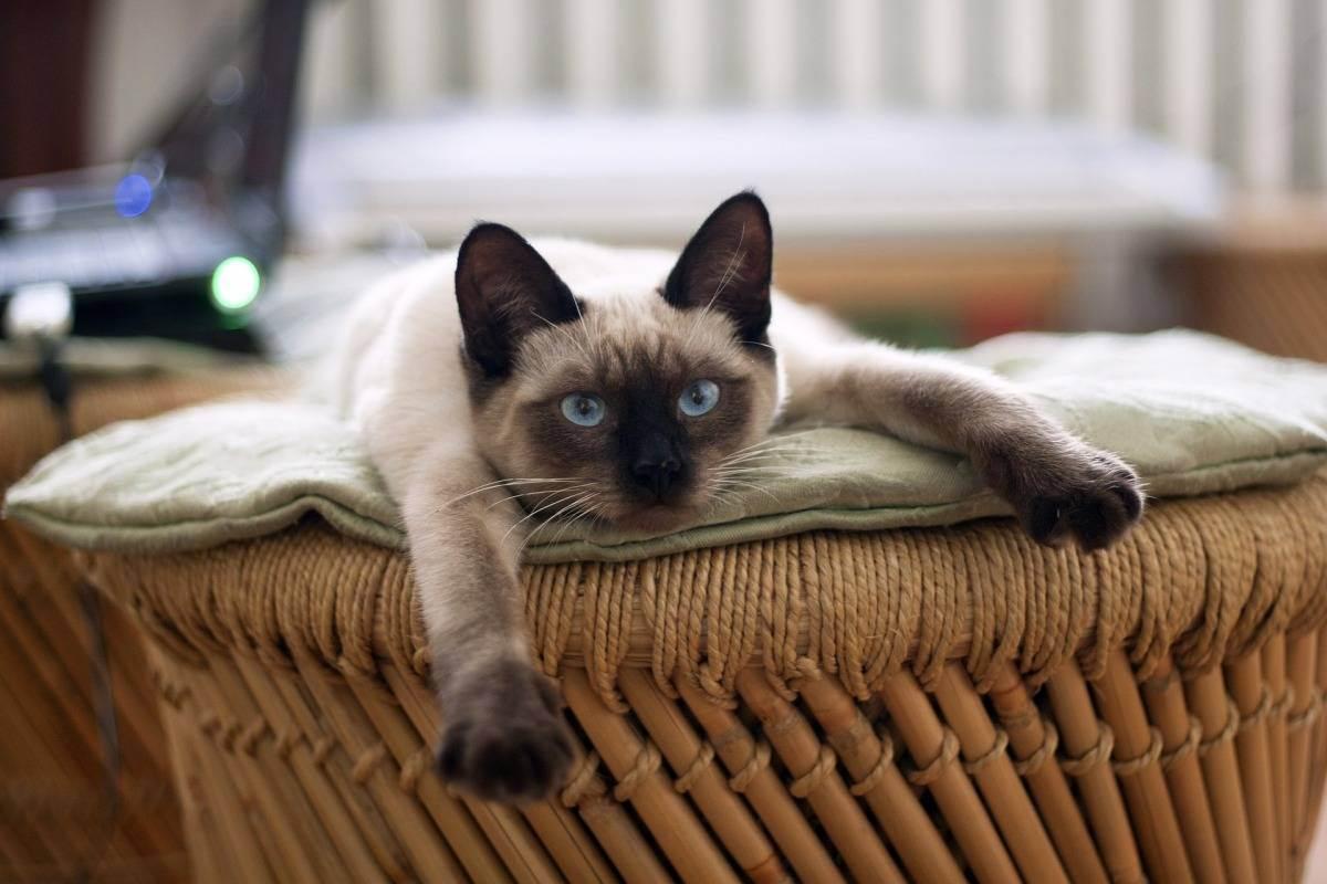 Всё о животных: могут ли найти кошки дорогу домой, если их вывезли на расстояние несколько километров?