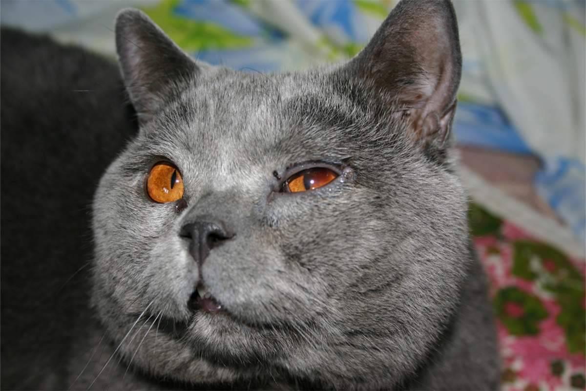 Котенок чихает и слезятся глаза: лечение, причины