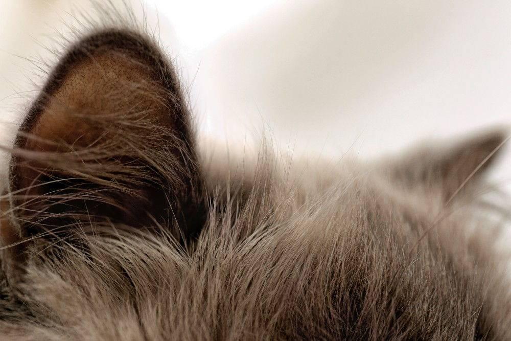 Горячие уши: основные причины и обозначение, примеры что является нормой