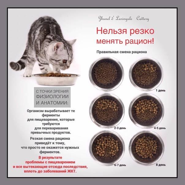 Как перевести кошку на новый сухой корм. как перевести кота на новый корм? радикальные меры смены рациона - новая медицина