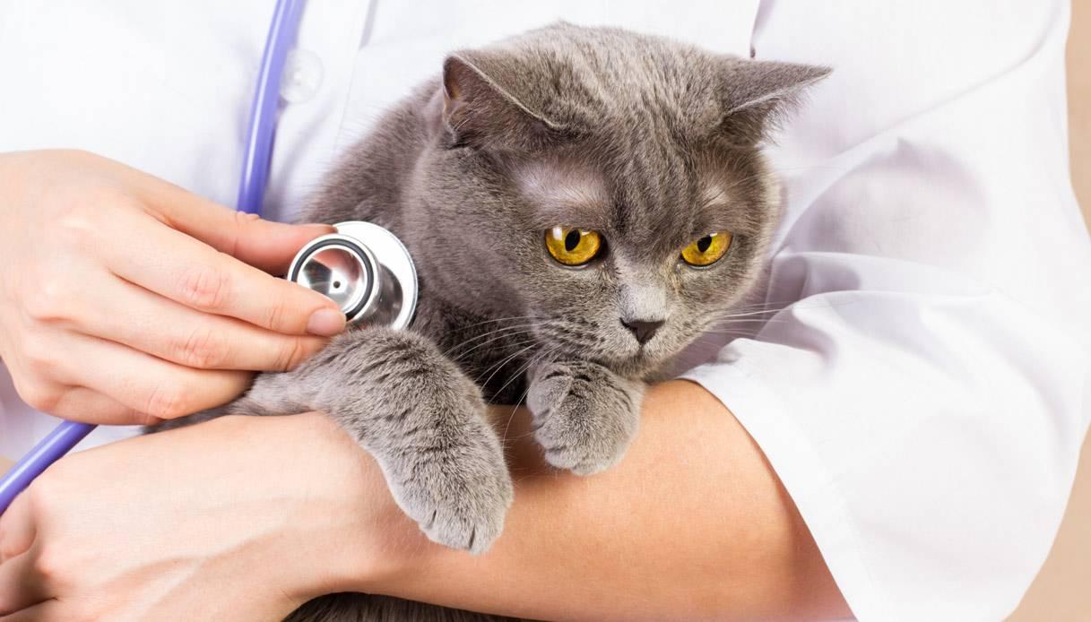 Простуда у кошек — причины, симптомы и лечение