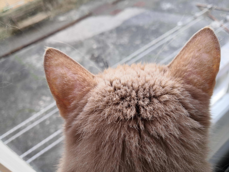 Из-за чего у кошки может выпадать шерсть?