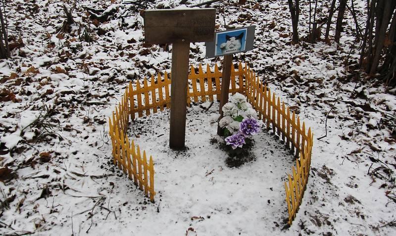 Как похоронить кошку зимой самому. как похоронить кота: возможные варианты
