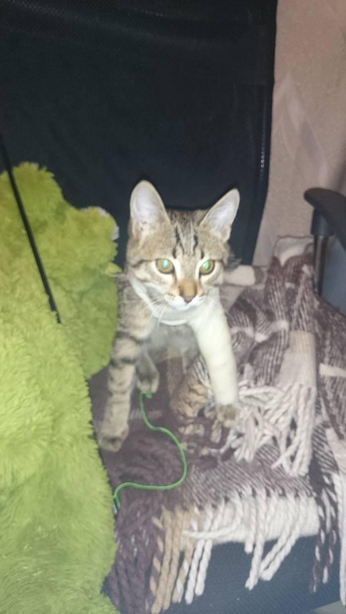 Перелом лапы у кошки: что делать в домашних условиях