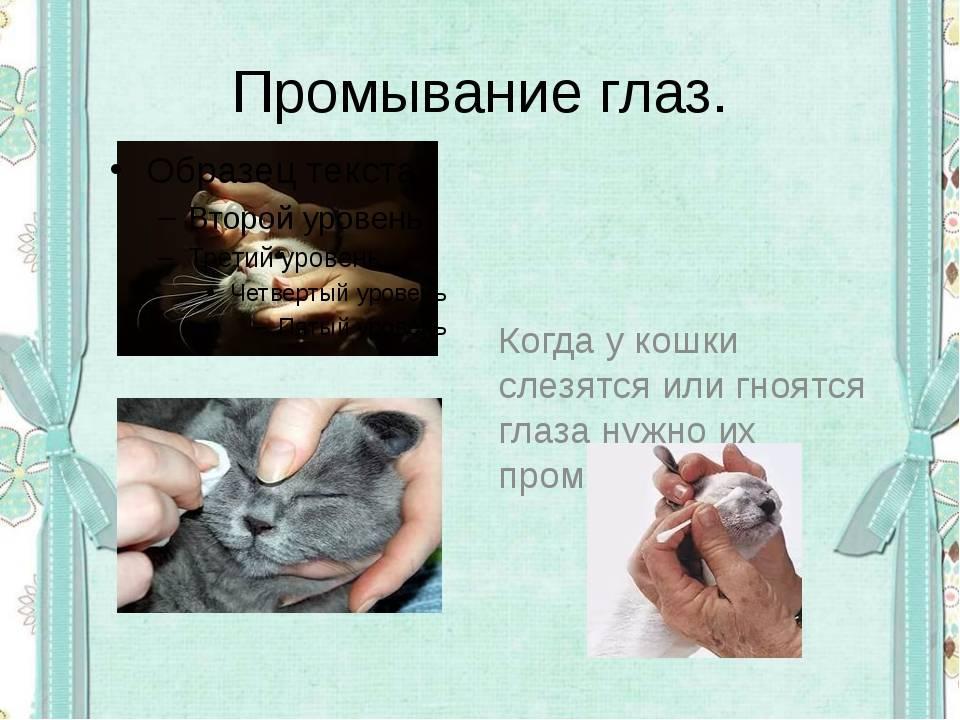 Промыть глаза коту в домашних условиях