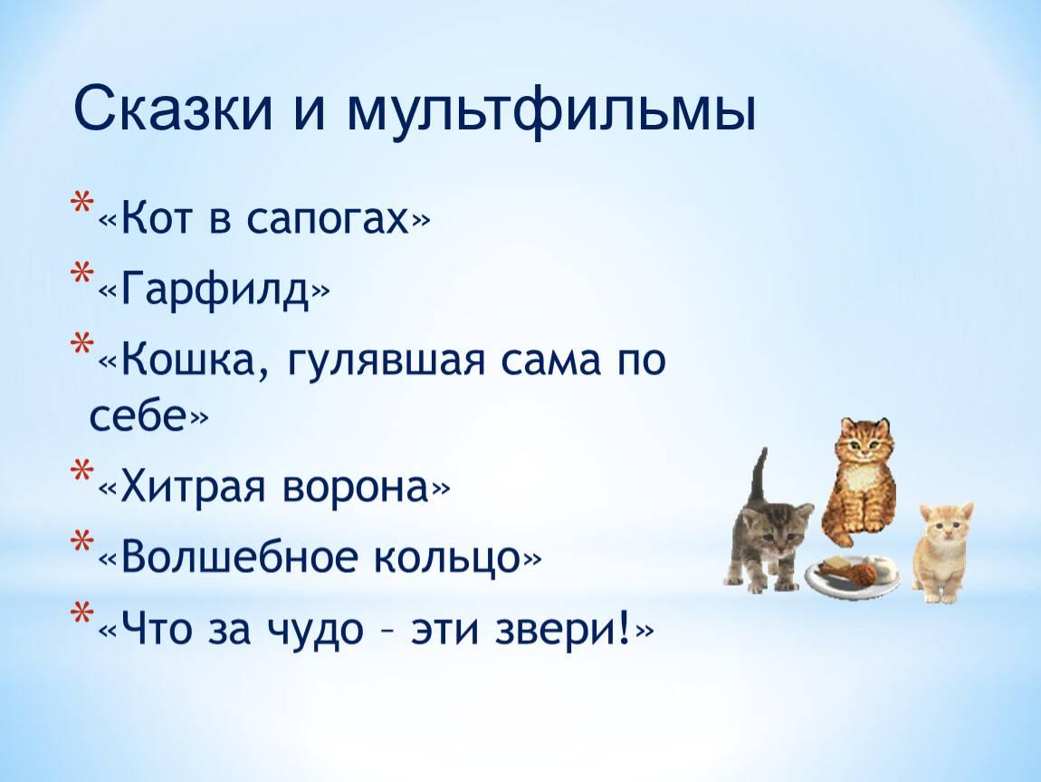 Сколько дней кошка просит и хочет кота   как долго гуляет