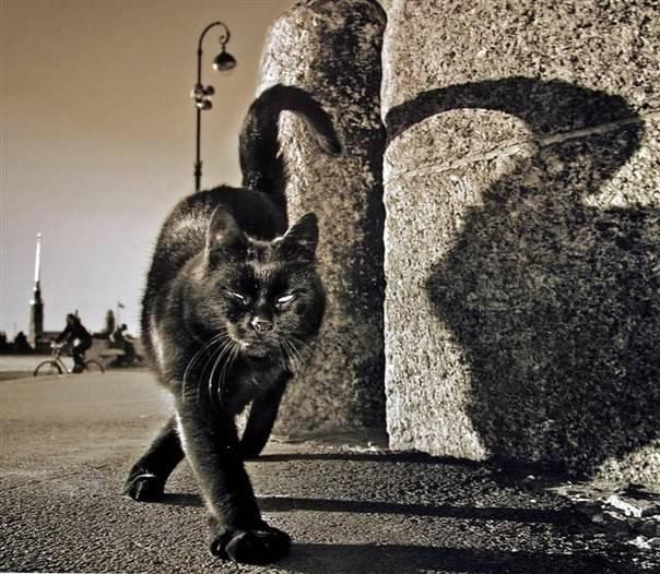 Что делать, если кот загулял?