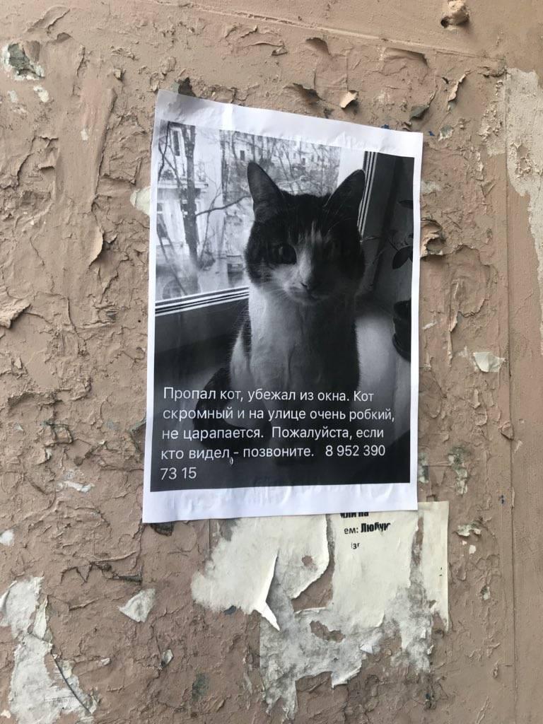 Пропала кошка: как найти, что делать, причины