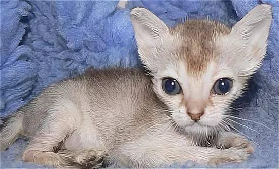 Воспаление трахеи у кошки: причины и методы лечения