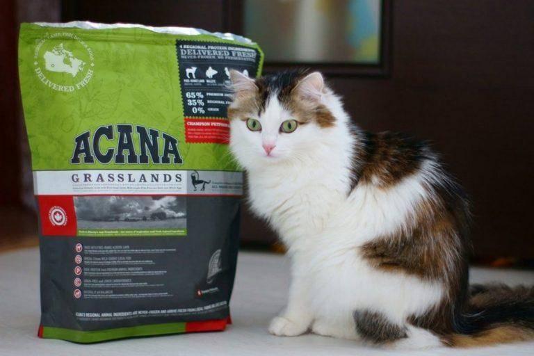 Можно ли давать кошкам корм для котят и чем он отличается от взрослого, отзывы