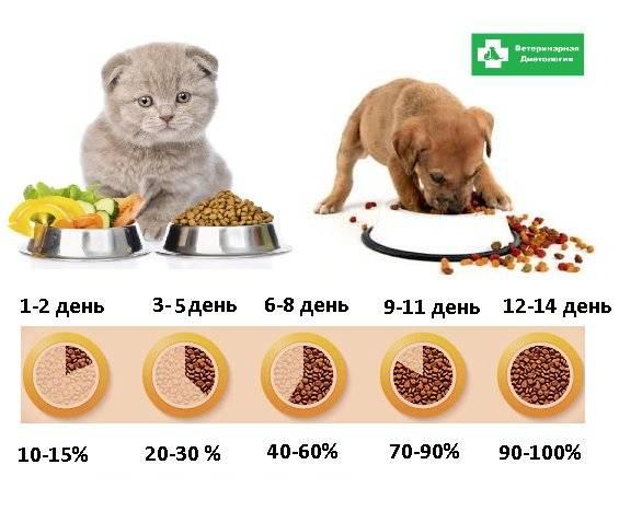 Как приучить котёнка к сухому корму как приучить котёнка к сухому корму