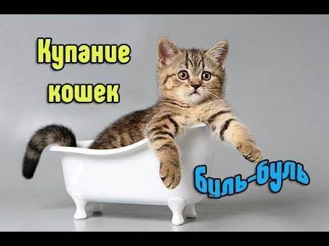 Как помыть кота? 61 фото как правильно купать 2-месячного котенка в домашних условиях? как пользоваться сеткой для мытья котов? можно ли купать котов хозяйственным мылом?