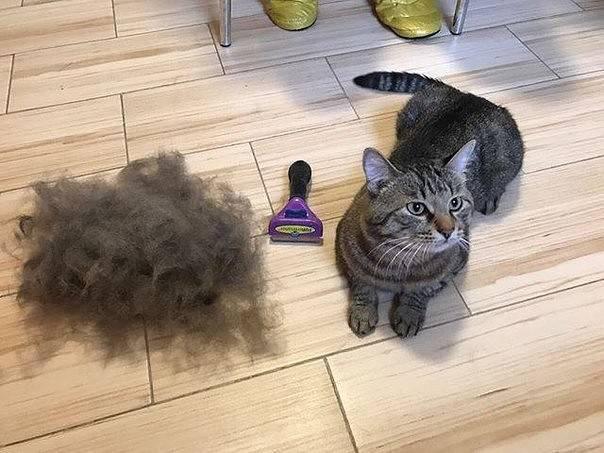 Выпадает шерсть у кошки: причины, лечение | pet7
