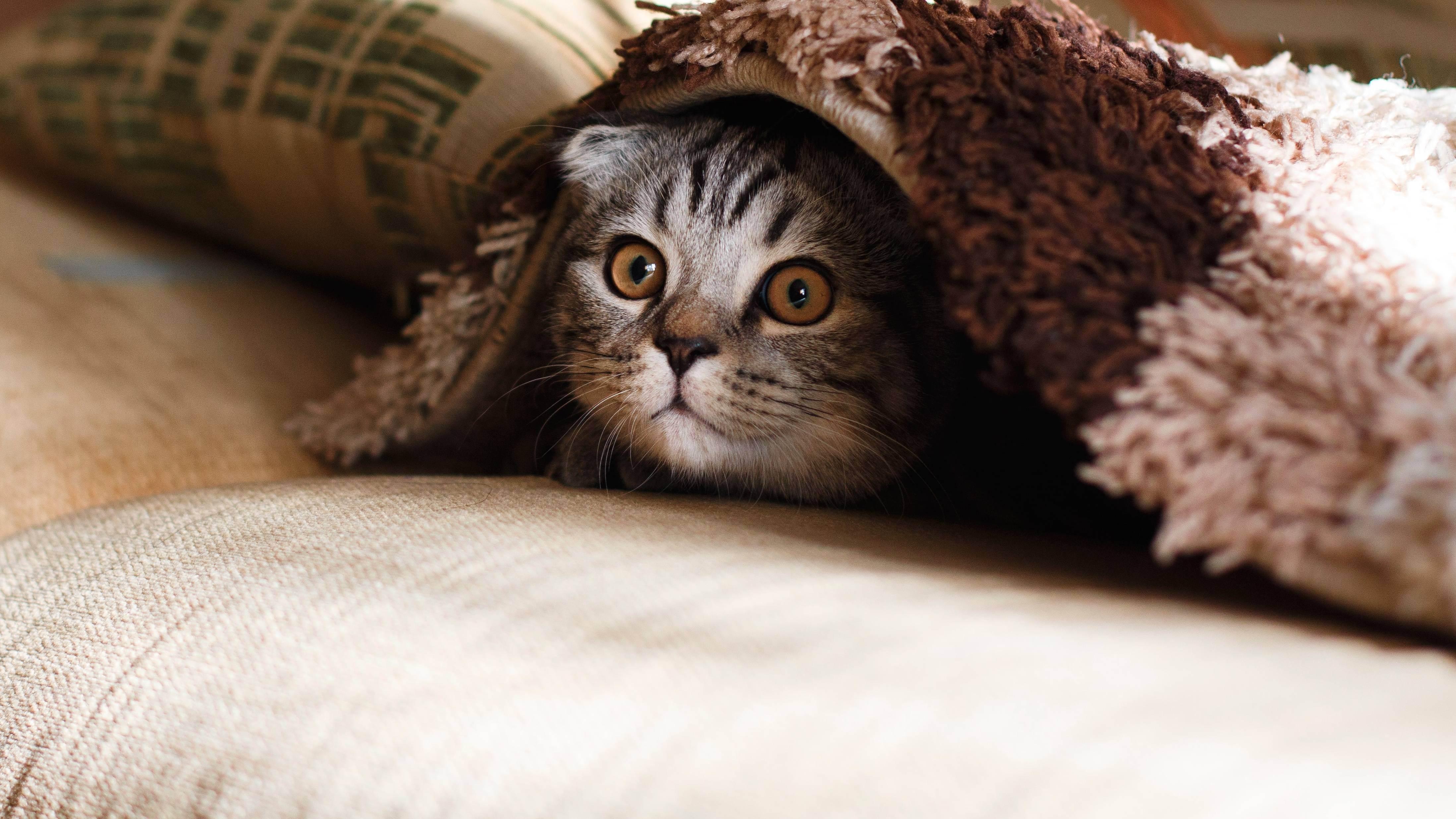 Аллергия на кошек: симптомы и какие породы кошек гипоаллергенные