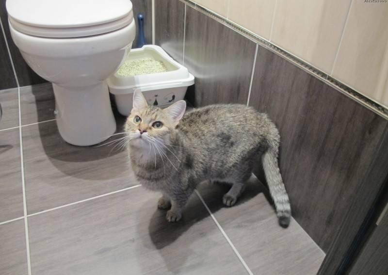 Если кот писал с кровью как лечить - муркин дом