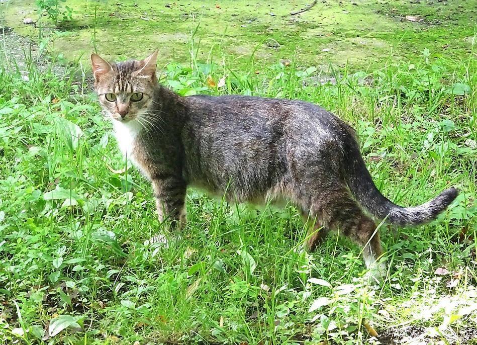 Дворовые породы кошек с фотографиями