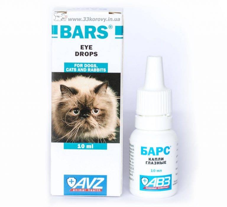 Лечим конъюнктивит у кошек в домашних условиях: симптомы, народные средства и лекарства