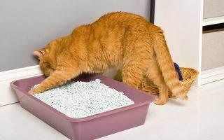 Как правильно насыпать наполнитель в кошачий туалет с решеткой фото