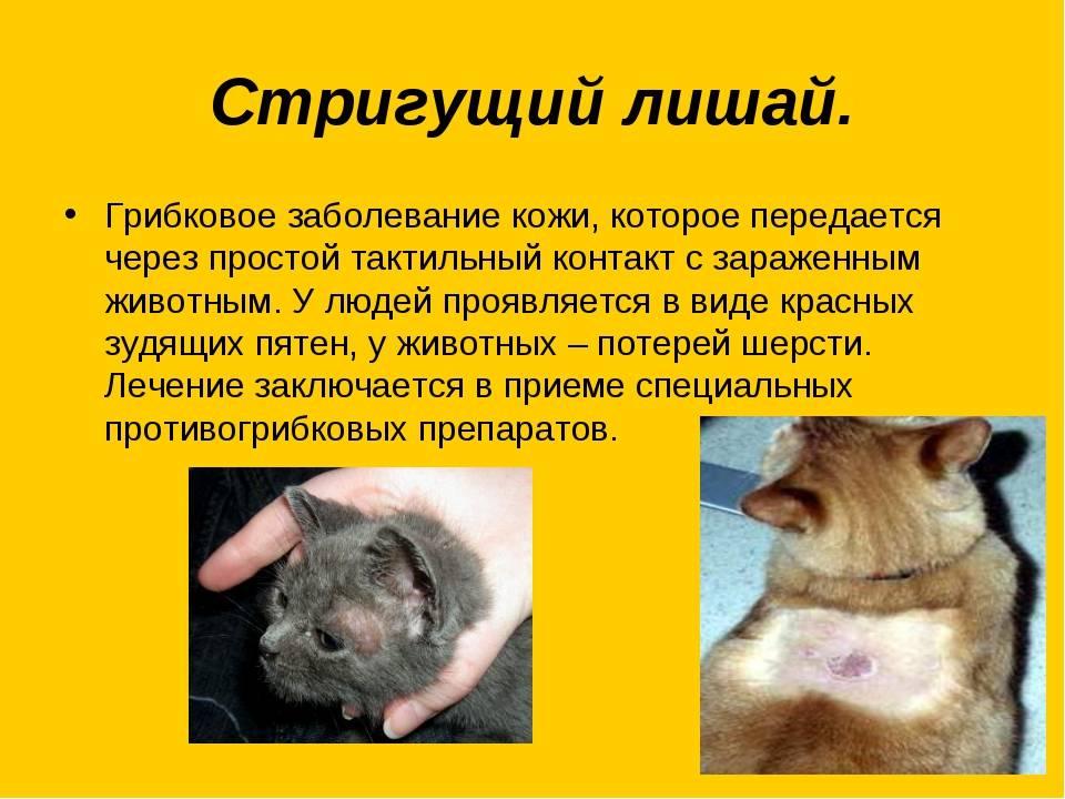 Какие опасные болезни от кошек передаются человеку