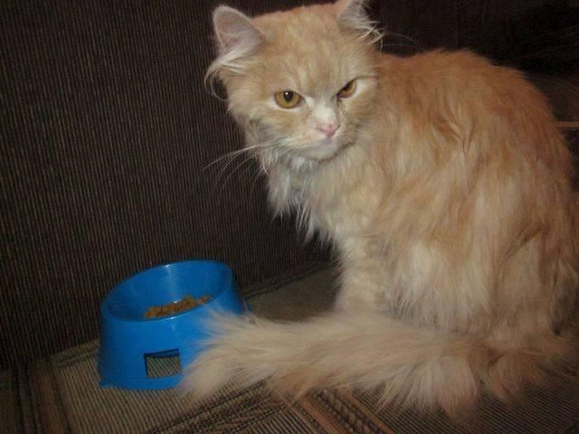 Лечение колтунов у котов - муркин дом