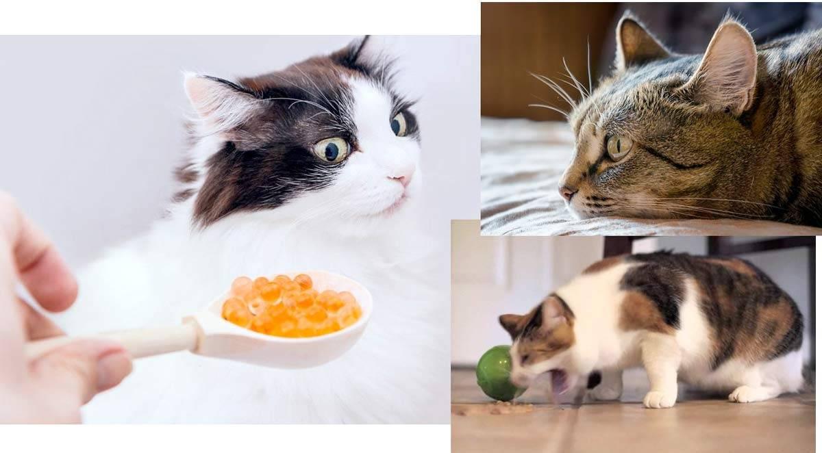 Что сделать чтобы кошка поела