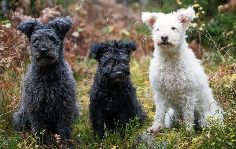 Как собака влияет на энергетику человека и жилища? | здорова и красива