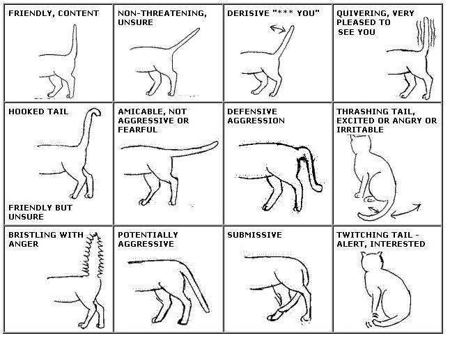 Почему кошки мурчат: отвечаем интересно и с фактами
