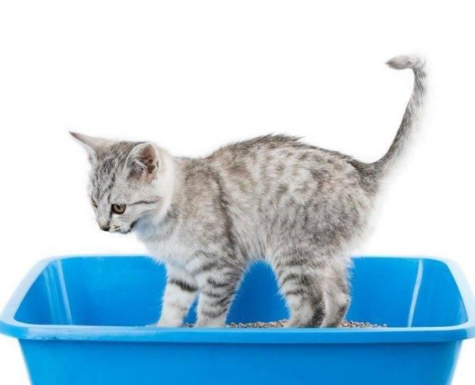 Когда котята начинают учиться ходить?