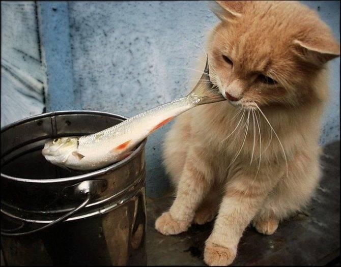 Сколько кошка может прожить без еды и без воды