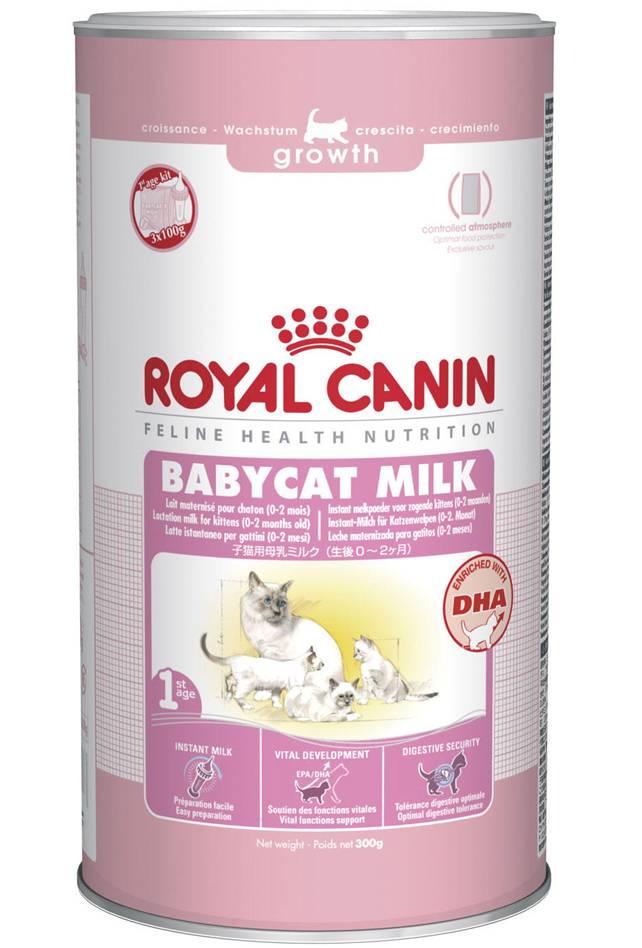 Заменитель кошачьего молока: особенности продуктов альтернативного кормления