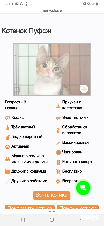 Почему нельзя обнимать котов и кошек | можно ли