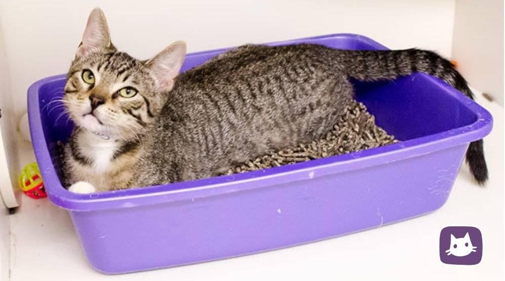Какой хороший наполнитель для кошачьего туалета? отзывы, советы, рекомендации, цены