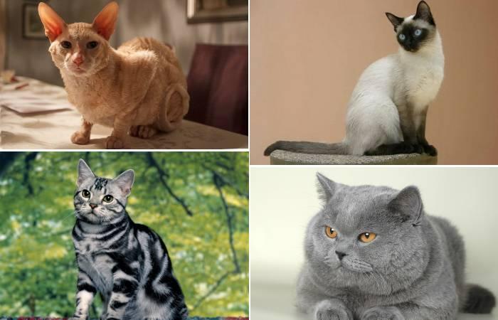 Какие породы кошек лучше всего уживаются в семьях с маленькими детьми