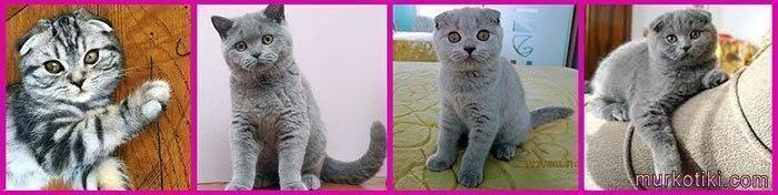 А если поцарапала кошка? - бешенство от царапины кошки - запись пользователя эльвира (elv100) в сообществе здоровье новорожденных в категории паразиты, лечение и профилактика - babyblog.ru