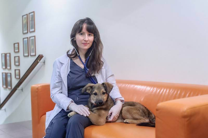 Ветеринарная помощь домашним животным