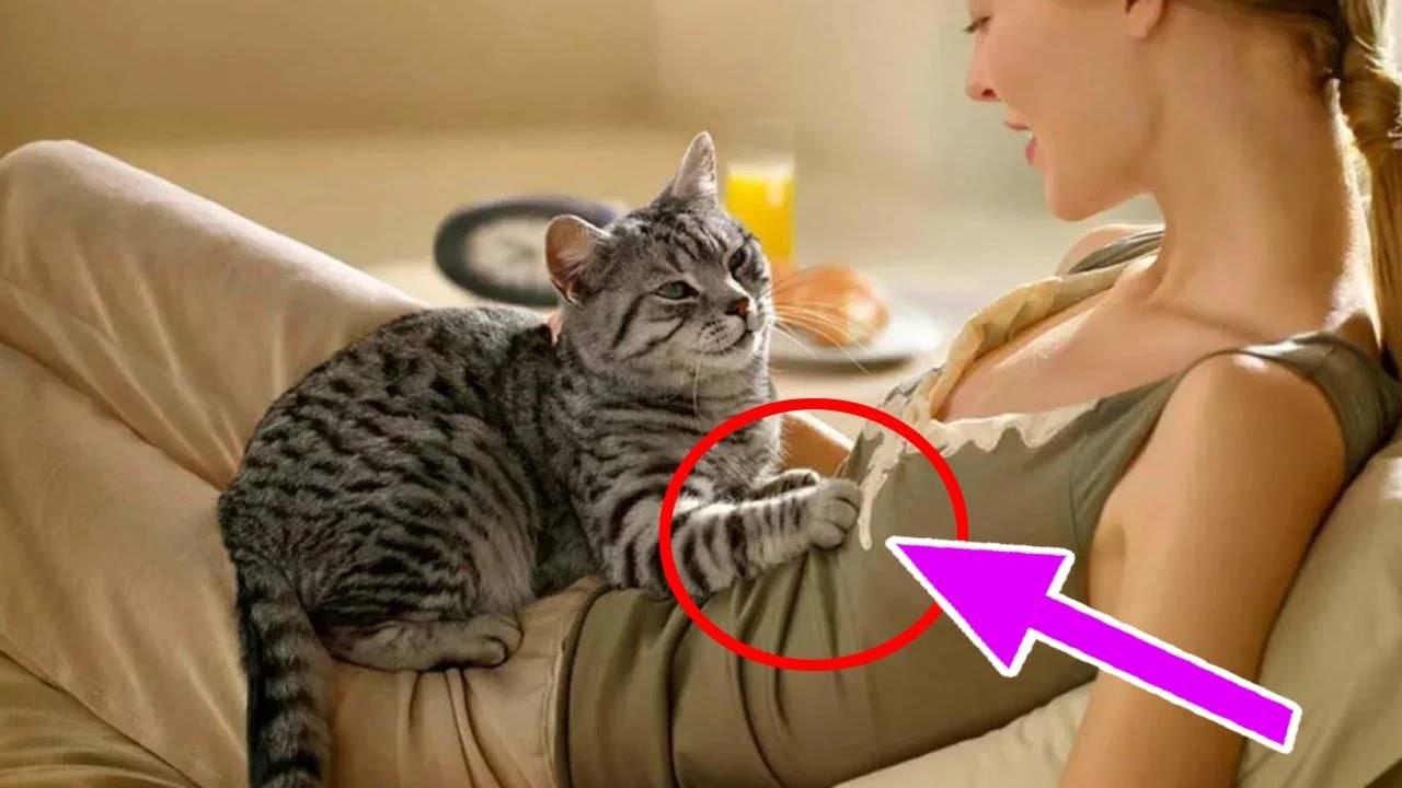 Почему кот топчется передними лапами?
